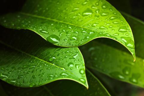 Rain Sounds MP3 Download for Sleep and Relaxation