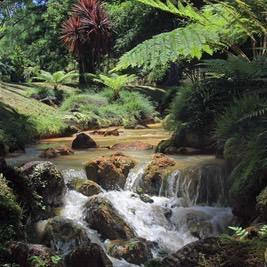 River sounds: Jungle Creek